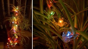 クリスマスオリヅル