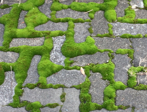 歩道の苔庭