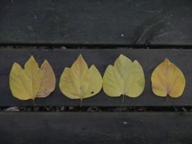 葉のバリエーション
