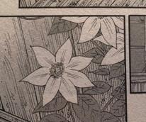 七弁の花(『はじめアルゴリズム』三原和人)