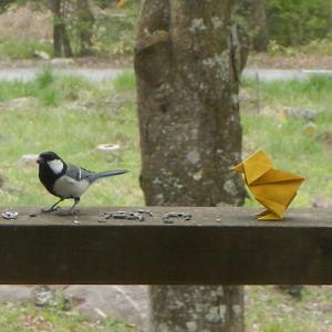 シジュウカラと折り紙のヒヨコ